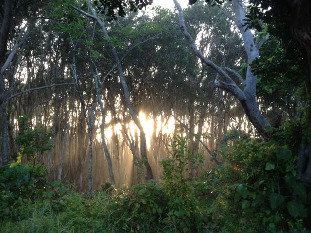 mist through trees caMP 2